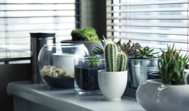pots-plants-cactus-succulent