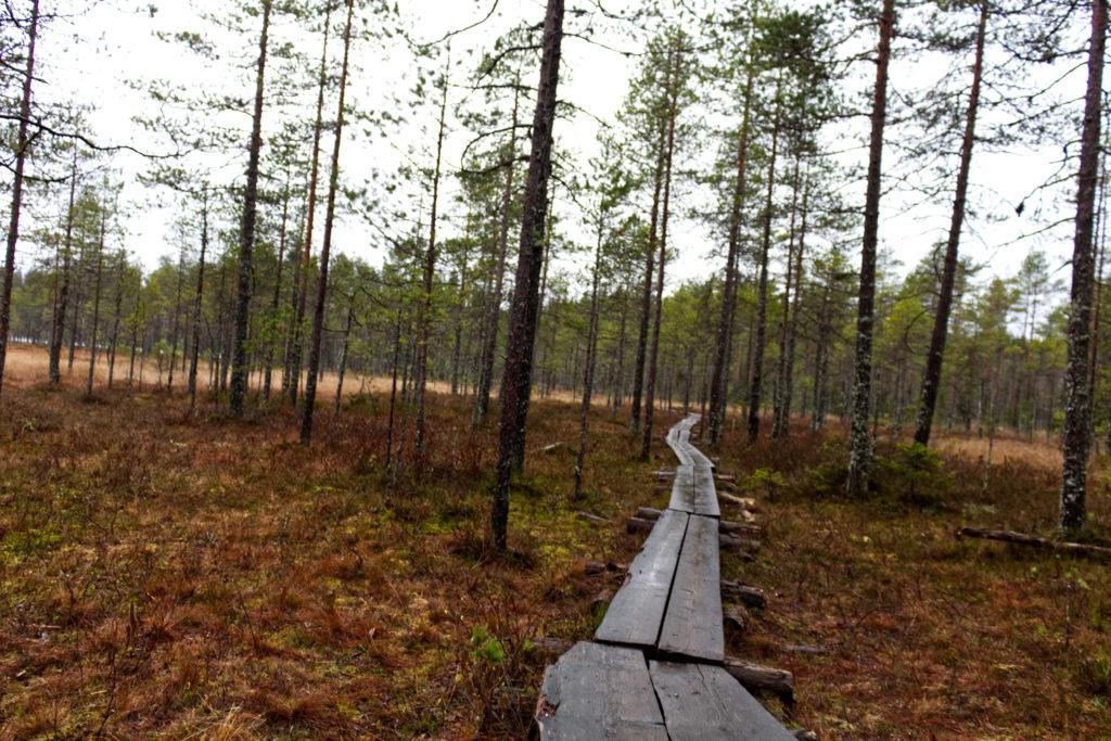 lebenszeichen; Finnland